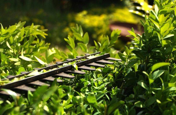 Smidigt trädgårdsarbete med batteridrivna Black & Decker produkter