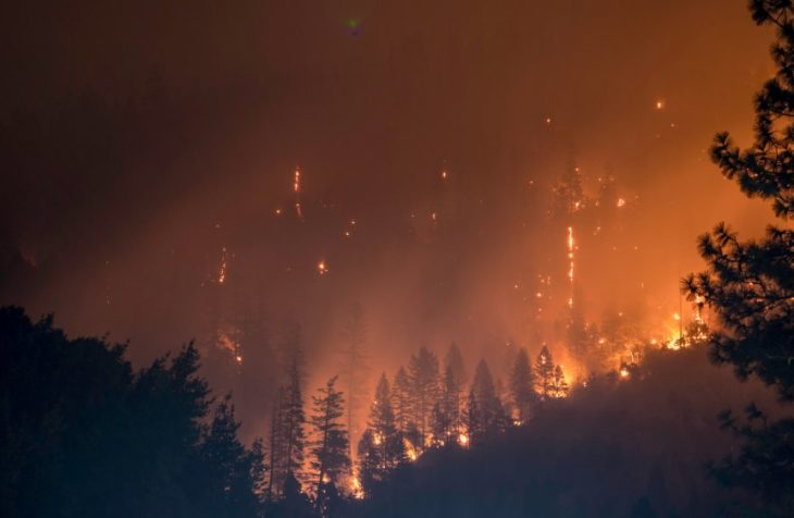 En skogsbrand som låter nya drömmar slå rot